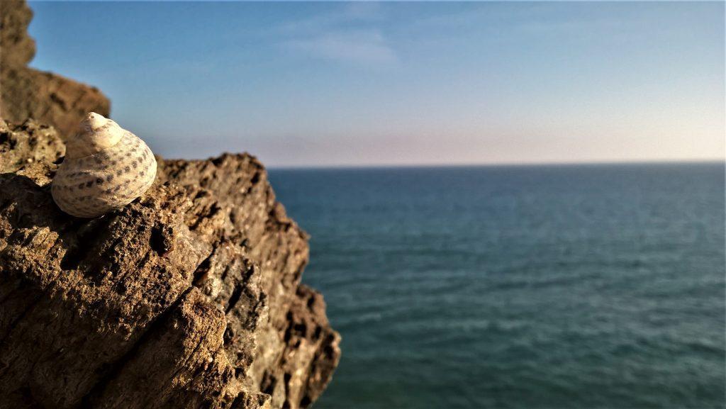 conchiglia sul mare